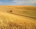 По-малко зърно за вътрешния пазар на Украйна