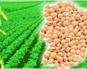 Значително по-малка реколта от рапица в Украйна