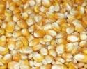 Румъния е осигурила близо две трети от износа на царевица от ЕС. България е изместила Франция от второто място