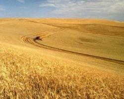 Русия ще увеличава производството на пшеница през следващите 5 години