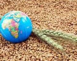 Без изненади на световните зърнени пазари